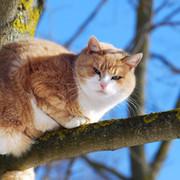 Фото животных group on My World