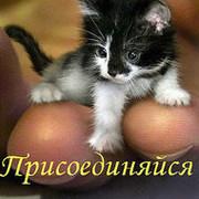 Без кота и жизнь не та ツ group on My World